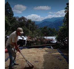 "Mexique - ""OCELOTL"" | SIERRA MADRE DE CHIAPAS | CHIAPAS - BIO"