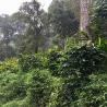 INDE Malabar Moussonné Karnataka AA