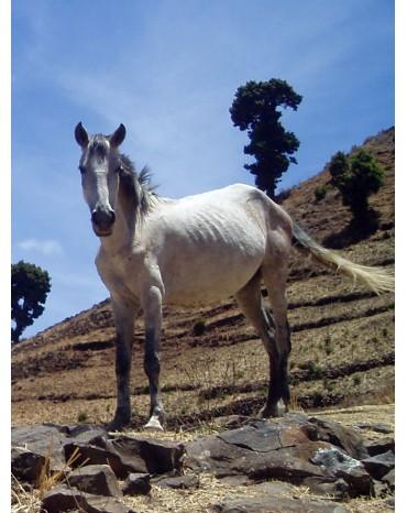 """Ethiopie Moka Harrar """"Wild Horse"""" Kundudo"""