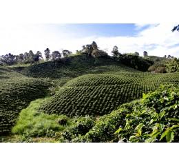 Colombie Titiribi Antioquia EXCELSO Bio