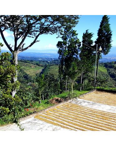 Micro-Lot / COSTA RICA | JONATHAN CAMACHO - CANUELA | VALLÉE DE L'OUEST