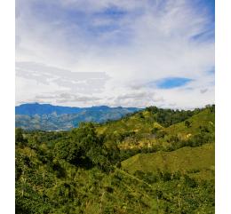 République Dominicaine - IGUANA | Rancho Arriba | SAN JOSÉ DE OCOA | CIBAO