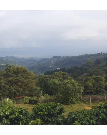 COSTA RICA  - VALLEE OUEST - NARANJO - TICO - SHB