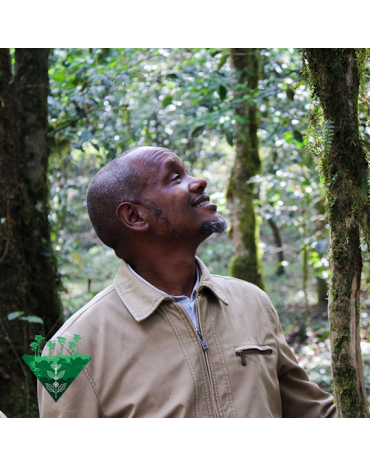 Cafés De Fôret / Mustafa MOHAMED ALI - ETHIOPIE | BOTTO JIMMA| GOMA - BIO