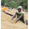 MICRO-LOT / ETHIOPIE | HELEANNA GEORGALIS | BENSA HOMASHO | MOPLACO | BENSA | SIDAMA